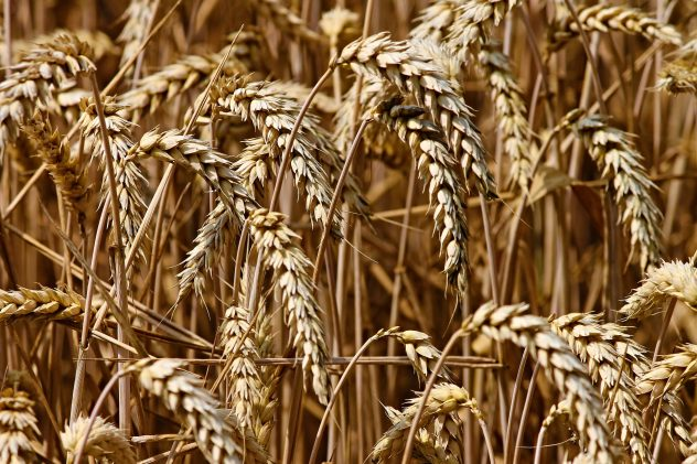 Grains, food nutritions and facts